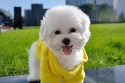 幼犬饲养的注意事项都有哪些,幼犬如何饲养