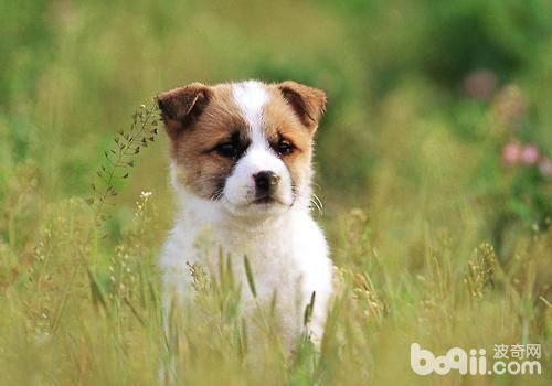 如果不是身体问题,对于狗狗的吠叫可不予理睬