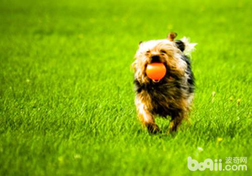 了解狗狗的行为