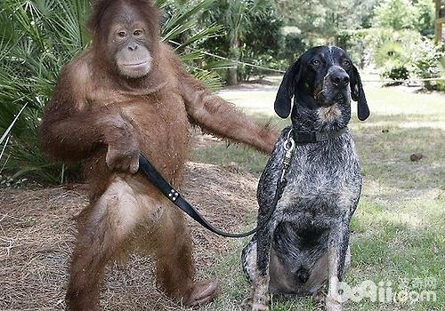 狗狗对人有着很好的理解力