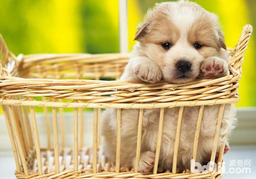 尽量让狗狗远离危险物品
