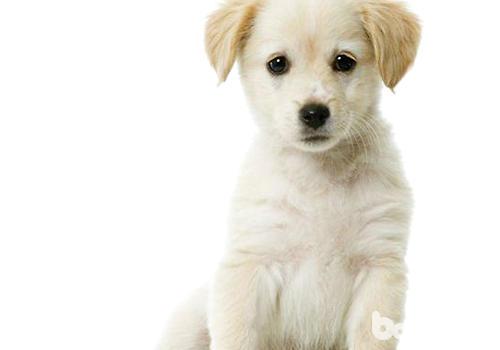 狗狗的被毛生长速度也存在个体差异