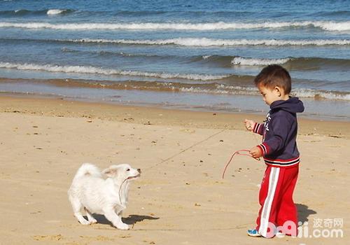 让孩子了解狗狗的情绪变化