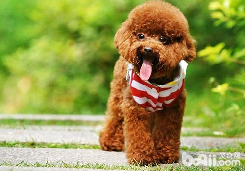制定一个合理的饲养计划,不要过于宠溺狗狗