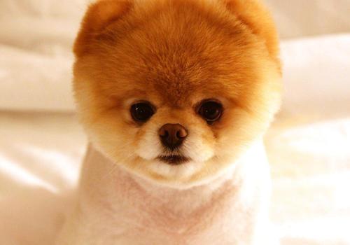 尽量选择体型偏小一点的狗狗