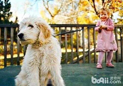 尽量让狗狗保持在自己的视线内