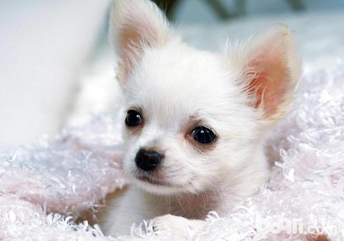 对于刚到新家的狗狗要先给狗狗一段适应的时间,过大的压力很容易引起应激反应