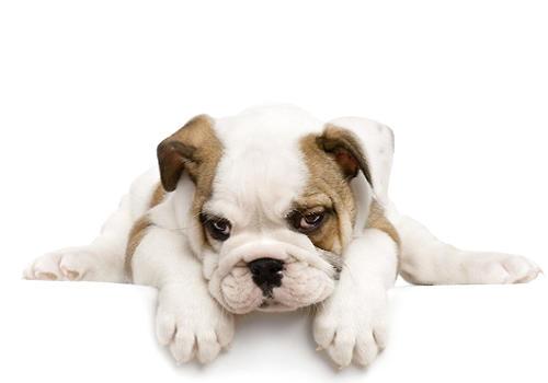 狗狗过于频繁地重复一个动作可能是不安的表现
