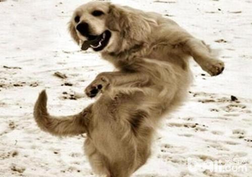 不同性格的狗狗所适合的群体也不同