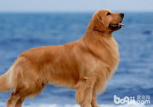 在狗群中特别干净的狗狗建议不要购买