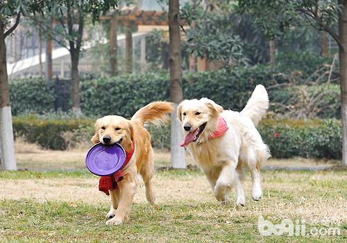 狗狗相互之间友好地玩耍同样非常重要