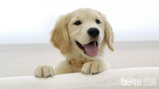 为什么有人喜欢养狗狗 养狗的好处有哪些