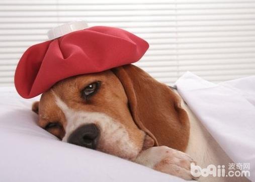预防狗狗中暑的措施,狗狗预防中暑要注意什么