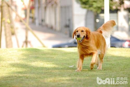 狗狗太活泼应该怎么办,狗狗太活泼的原因
