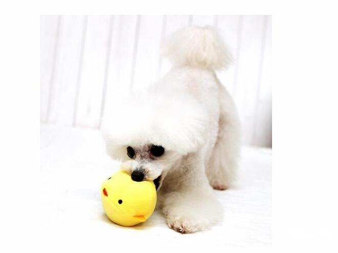 狗狗玩具应该怎么挑选 要注意什么