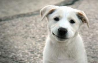 狗狗害怕的气味都有哪些,狗狗害怕什么气味