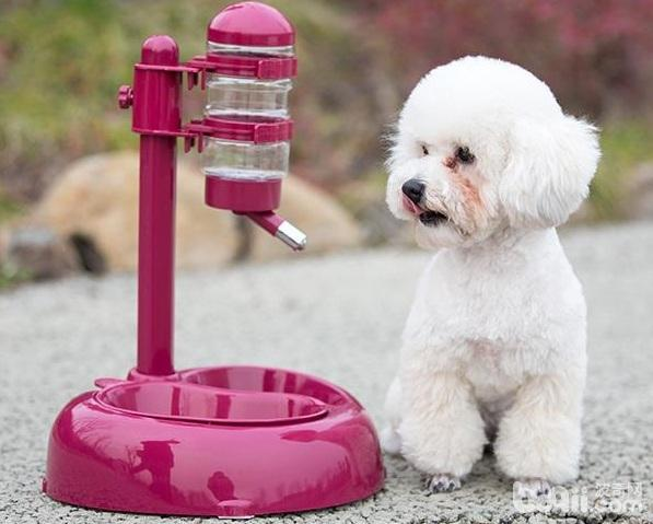 狗狗喝什么水好狗狗喝水的注意事项