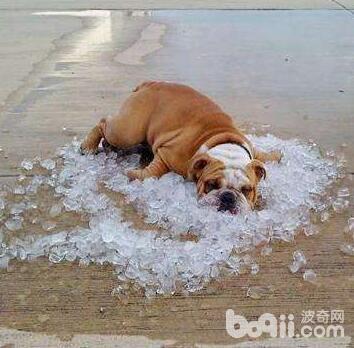 狗狗吹空调,狗狗吹空调的注意事项有哪些