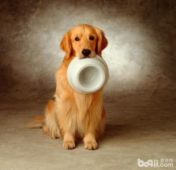 养狗的注意事项,养狗的禁忌都有什么