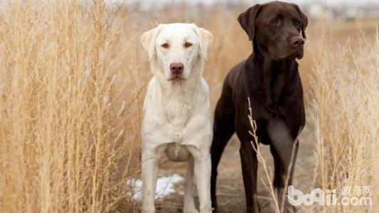 狗狗吃便便怎么办狗狗为什么吃便便