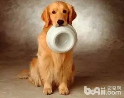 狗狗吃大便的原因,狗狗为什么会吃大便