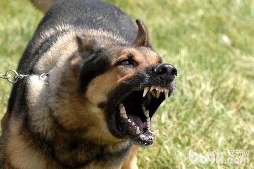 狗狗咬人,狗狗咬人的六大原因