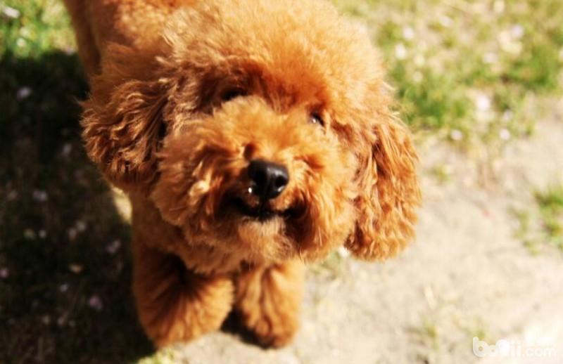 夏季养狗的注意事项,夏季养狗应该注意什么