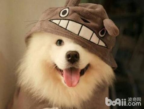 狗狗的尴尬期是从什么时候开始的