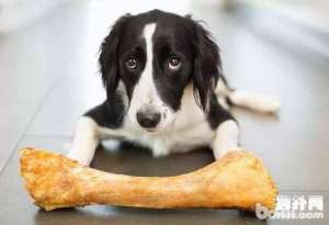 狗狗可以吃骨头吗,狗狗喂养的误区有哪些
