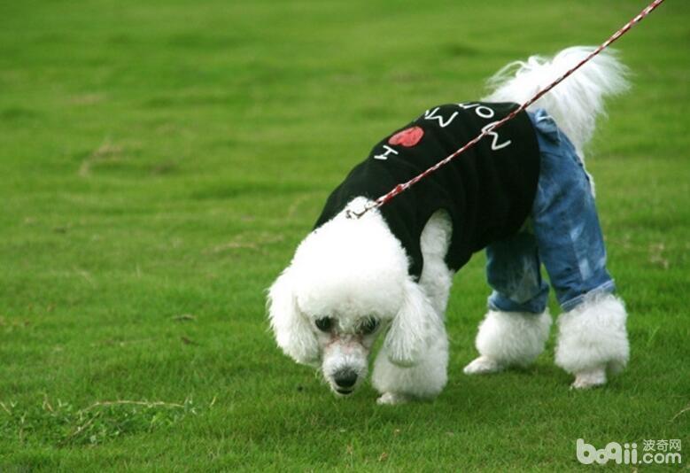 养狗应该注意什么问题狗狗饲养技巧介绍