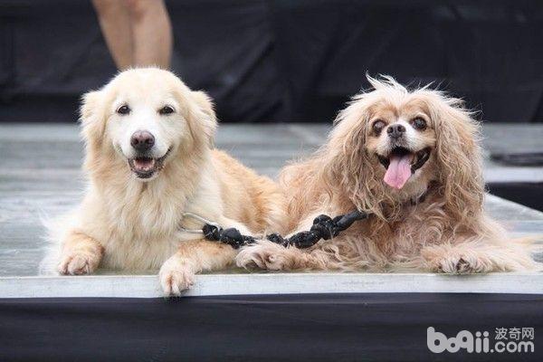 养两只狗的注意事项都有哪些