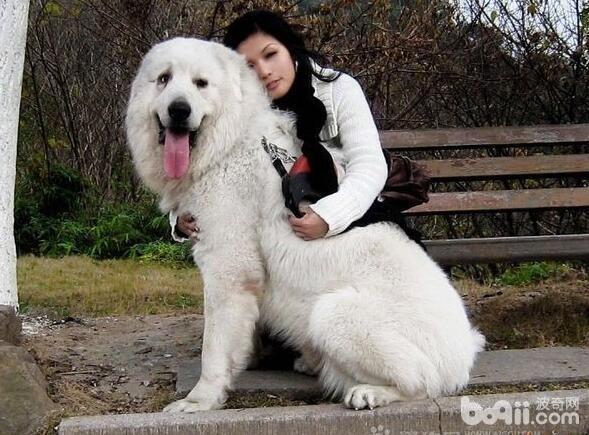狗狗讨厌的事情,狗狗最讨厌的事情都有哪些
