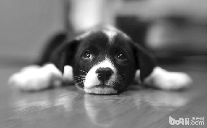 狗狗死后最好的处理方式是什么