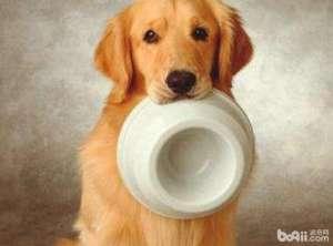 成犬粮应该怎么挑选