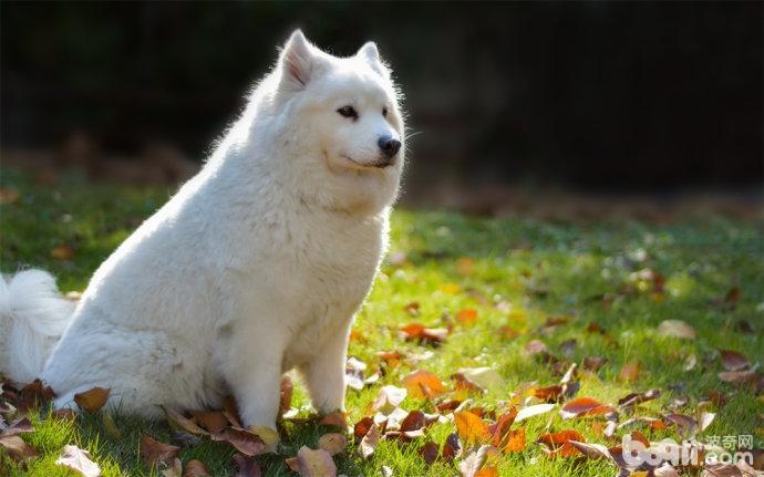 秋季养狗应该注意哪些问题