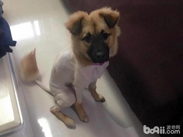 狗狗剃毛能避免中暑吗如何防止狗狗中暑