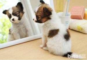 狗狗为什么不爱吃狗粮狗狗不爱吃狗粮的原因有哪些