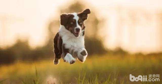 狗狗性格分析,你们家狗狗是哪种性格