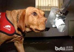 你知道狗狗害怕什么气味吗