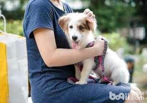狗狗能活多少年,影响狗狗寿命的原因有哪些