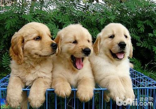 狗狗一生中必经历的五件事,宠物主快看看吧