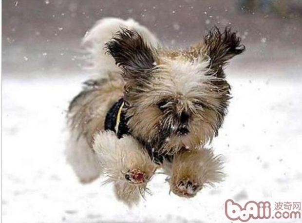 冬天为幼犬御寒的几种方法