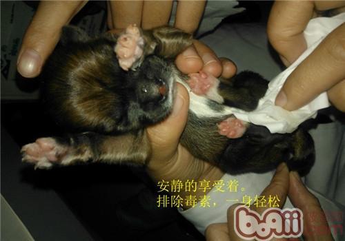 如何自己照顾刚出生的幼龄动物