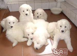 幼犬及老年犬冬季需特别呵护