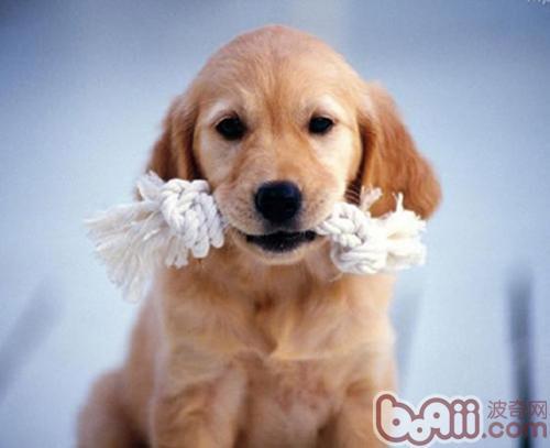 了解狗狗的换牙期