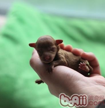 狗宝宝的早期发育过程详解