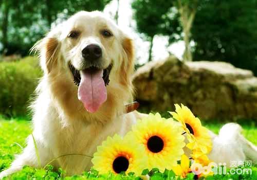 如何给狗狗取名?狗狗取什么名好听?