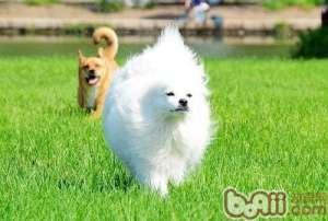 长毛犬如何进行日常毛皮护理