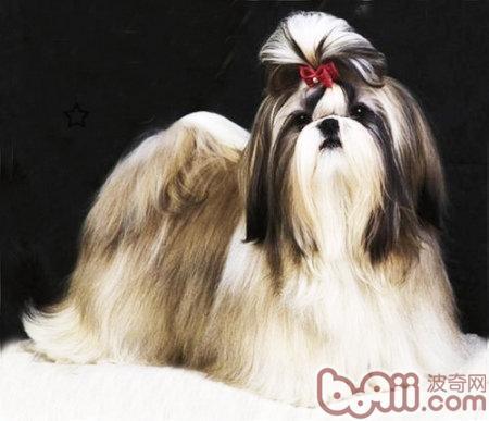 防止狗狗经常掉毛发的小办法