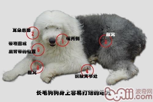 狗狗毛发篇之毛毛容易打结的地方